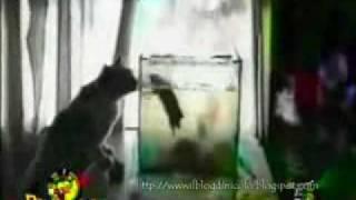 ぬこ動画-ハプニング集-
