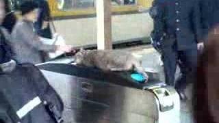 えきねこ Station cat
