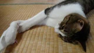猫にしつこいインコ
