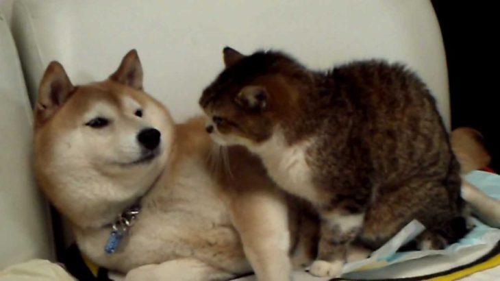 なめたら、猫パンチ!