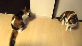 猫を撮っていたら、緊急地震速報が Earthquake Early Warning(EEW) and Cats