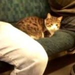 電車の中に猫 The cat is sitting on the seat of a train.