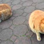 地震で揺れる猫たち Earthquake shakes Cats