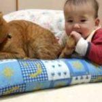 怒らない猫 ~ Baby bite cat's tail ~