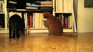 【爆笑】猫VSメトロノーム
