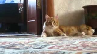 逃げ方が愉快なネコ