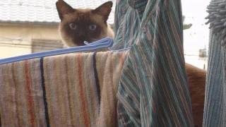 猫ダイビング大失敗