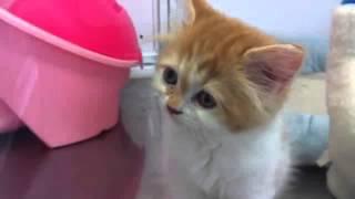 猫 ネコ ねこ! 超カワイイ動画集005 子猫