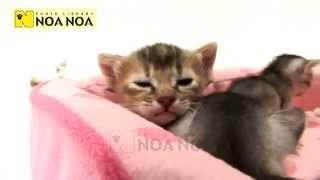 猫 ネコ ねこ! 超カワイイ動画集007 子猫
