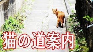 猫の道案内 【猫物語】 泣ける話