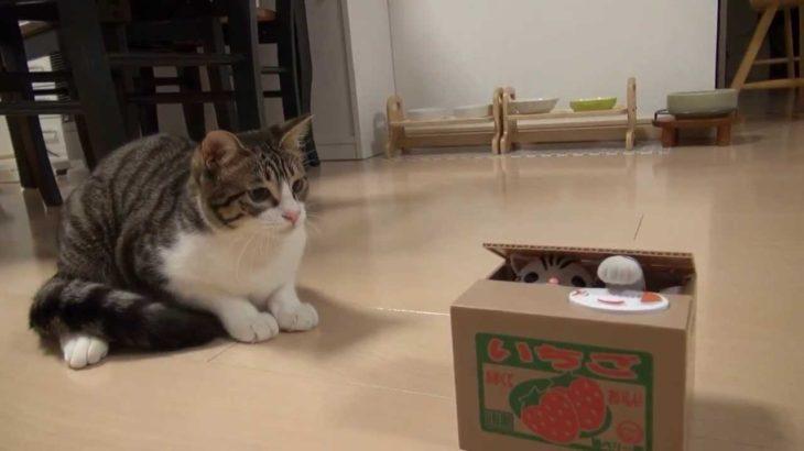 ポチっと押したら猫が出る!? Cat piggy bank and Amie