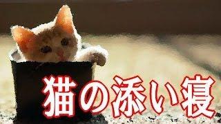 猫の添い寝 【死期】 泣ける話