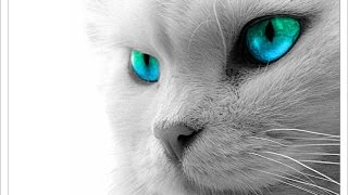 【猫 おもしろ】面白カワイイねこちゃん 2015 part2  kitten munchkin cat