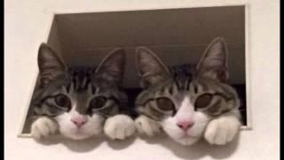 【ネコ】ネットで人気の かわいい猫 動画!!~癒し~