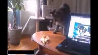 【猫びっくり】そんなに後ろに飛び上がる!?バナナの皮に驚くネコがカワイイ!