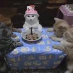 【動物面白ムービー集】 犬猫予想できない面白ハプニング動画