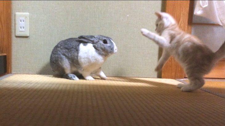 小さな子猫とかわいいウサギの戯れ The play of the kitten and rabbit