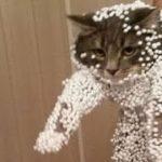 【猫のおもしろハプニング】どうしてこうなったの?