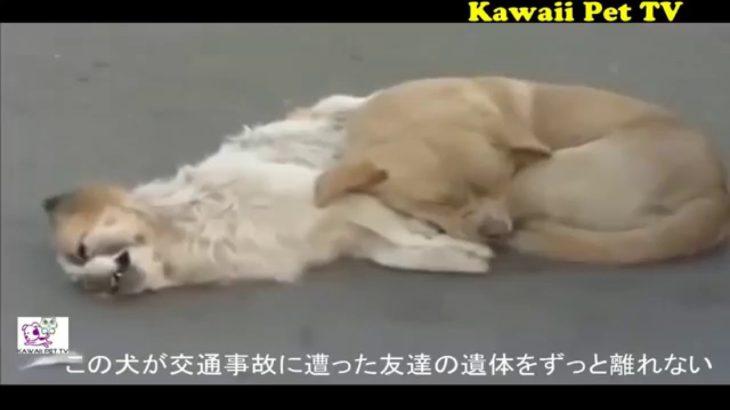 泣けるほど感動した動物の動画 ●この動画を見たら、泣かない人がいないだろう!