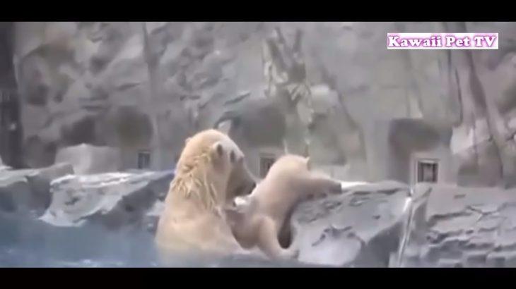 「泣ける感動動物」動物が他の動物の命を救う動画集●勇敢な犬,猫,熊……
