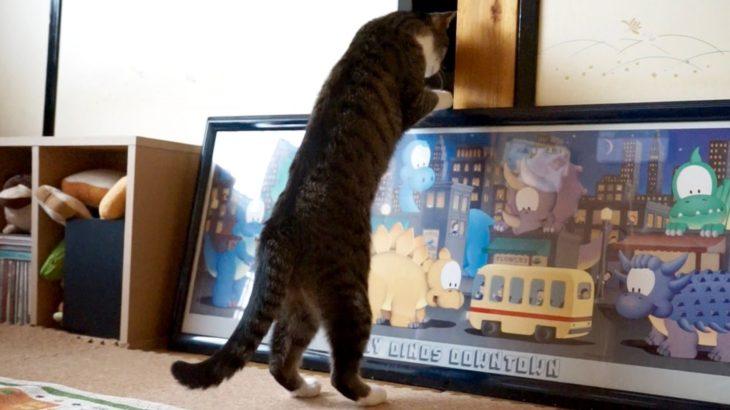 二度びっくり猫