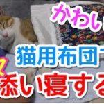 【猫おもしろかわいい】猫用布団でママに腕枕されながら添い寝する猫。
