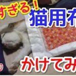 【猫おもしろ】猫用布団を掛けてあげたらめっちゃ可愛くなった!気に入ってくれたようである。