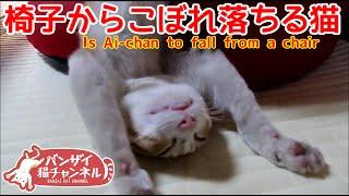 【猫おもしろかわいい】うちの猫の寝相が変です。ソファーからこぼれ落ちる猫。Cat spilling from the sofa