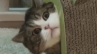 【動物おもしろ】爆笑ハプニングGIF動画【癒し】