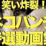 おもしろハプニング動画 ネコパンチ特選動画集〜笑い炸裂の11連発