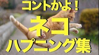 おもしろかわいいネコのハプニング動画集〜コントかよ!