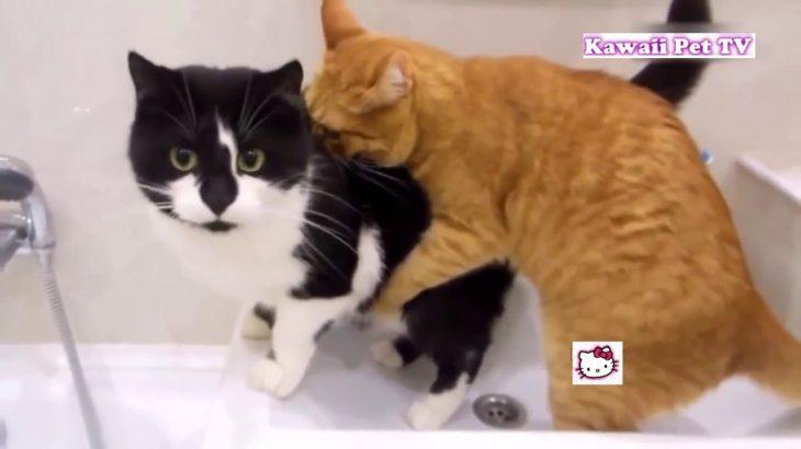 「おもしろ猫」最高におもしろ猫のハプニング●思わずに笑っちゃう猫の動画 #4
