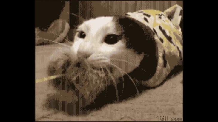 【面白カワイイ】猫の癒されGIF動画!珍プレー好プレー集