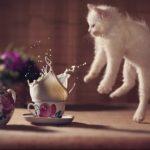 Pk Funny – 【猫おもしろ動画】びっくりして飛び上がる猫動画まとめ