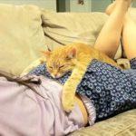 「おもしろ猫」可愛くておもしろ猫ハプニング動画集 2016・思わずに笑っちゃう猫の動画 #7
