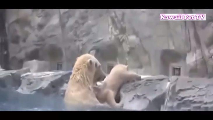「泣ける感動動物」動物が他の動物の命を救う動画集●勇敢な犬,猫,熊