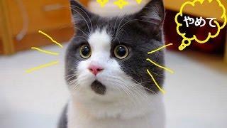 「ベスト猫ドッキリ」一瞬で笑っちゃう猫のハプニング・可愛い過ぎる#3