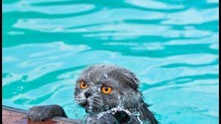 「猫のハプニング」水に落ちる猫たちの反応