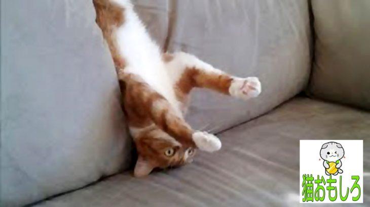 【猫 おもしろ】 – 猫 面白 ハプニング