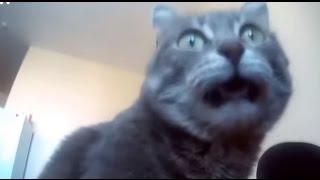 【猫びっくり】猫、飼い主の足が臭くてびっくり!映像