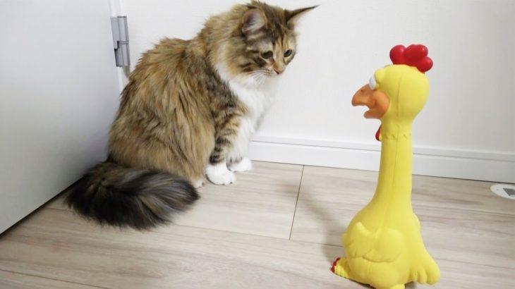 猫vsびっくりチキン