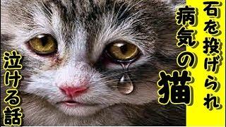 【感動 泣ける話 猫】「病気 気持ち悪いネコ!」石を投げられていた-病気持ちの猫と遭遇!その姿が自分と重なってしまい【感動 泣ける話】涙腺崩壊2ちゃんねる投稿・招き猫ちゃんねる