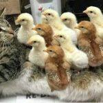 「かわいい猫」初めて他の子動物に会った猫の反応・新しい友達できて超嬉しそう