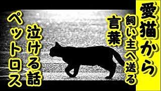 【感動 泣ける話 猫】ペットロス(その2)愛猫から→飼い主へ送る言葉-【感動 動物 猫  病気】【泣ける話 涙腺崩壊 虹の橋を渡った】・動画 里親・招き猫ちゃんねる