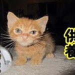 【感動 泣ける話 猫】毎晩(現在も)亡くなった子猫が現れます 猫の供養 切ない悲しい話人間の情、哀れみを感じて猫が現れるお話!泣ける話 動画 里親・招き猫ちゃんねる