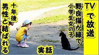 【感動 泣ける話 猫】TVで放送の実話です 野良猫の縁・小学生だった私は10年後偶然男性と再開し結婚したのですよ!【泣ける話 感動 動物 猫】動画 里親・招き猫ちゃんねる