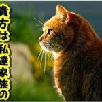 【感動 泣ける話 猫】ペットロス 多くの猫の飼主さんが感じていること家族に光を照らし続け力を与え続けた猫がいました私達を救う為に生まれて来たの【泣ける話 動物 猫 招き猫ちゃんねる】