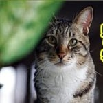 【感動 泣ける話 猫 】死期を悟った母猫の最後の可愛い贈り物【泣ける話 感動 動物 猫】動画 里親・招き猫ちゃんねる