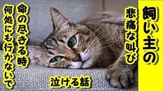 【感動 泣ける話 猫】死ぬときは絶対 この部屋で死んでね-知らないところで 死んだら嫌だからね 約束【泣ける話 感動 動物 猫】動画 里親・招き猫ちゃんねる