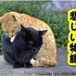 【感動 泣ける話 猫】子猫の兄弟の切なく悲しい想い出(猫 感動 泣ける話 保護 涙腺崩壊 感涙 動物 動画 里親)招き猫ちゃんねる